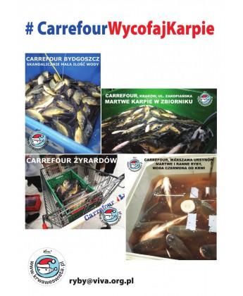 Pakiet 50 ulotek na temat wycofania karpi ze sprzedaży w Carrefour